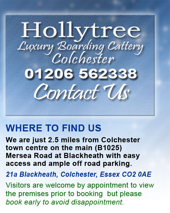 Hollytree Contact_Us