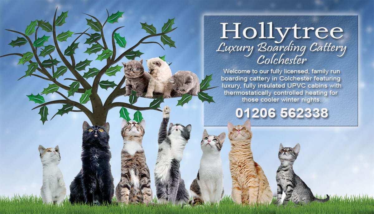 Hollytreecattery01